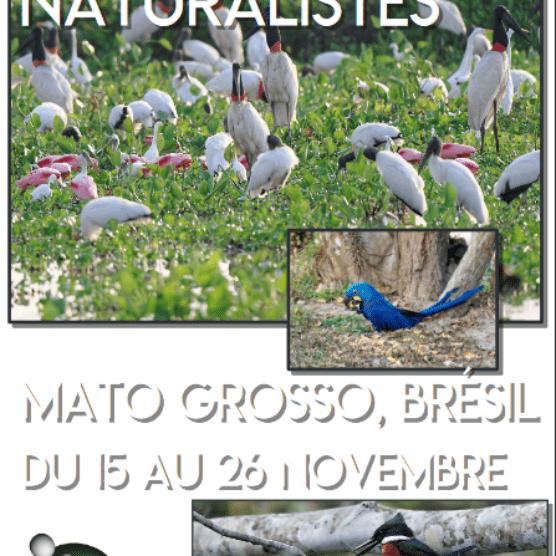 Découverte naturaliste au Mato Grosso au Brésil